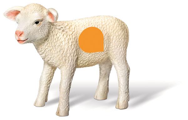 tiptoi Lamm